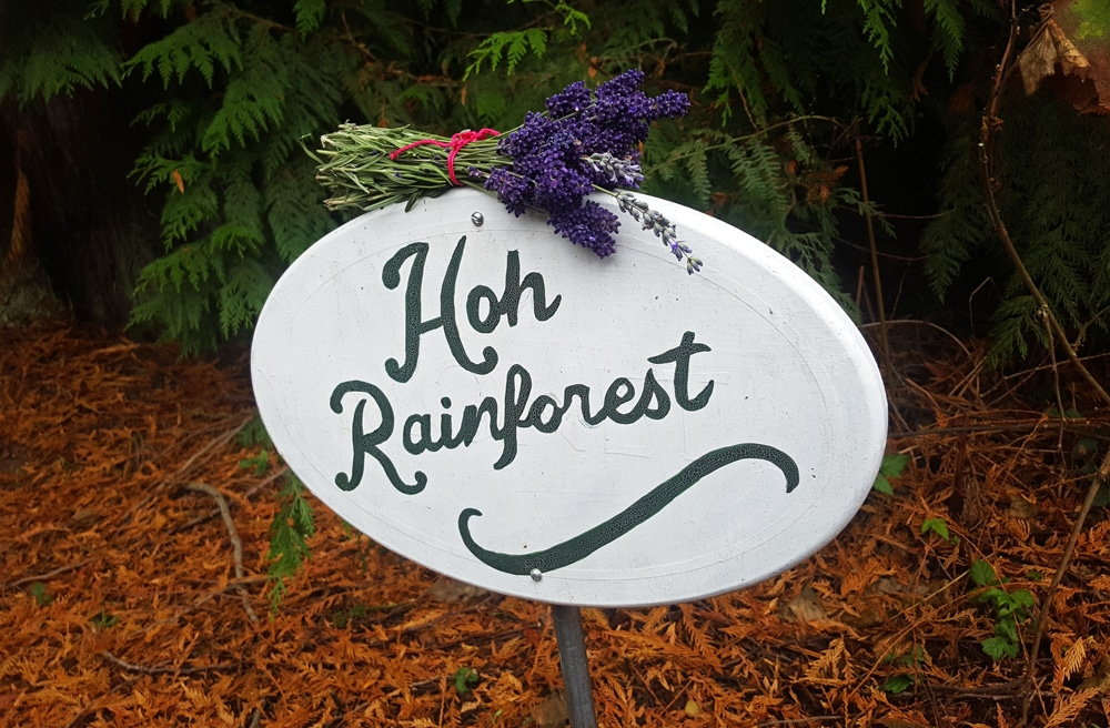Lavender on the Hoh Rainforest sign at Domaine Madeleine, Port Angeles, WA