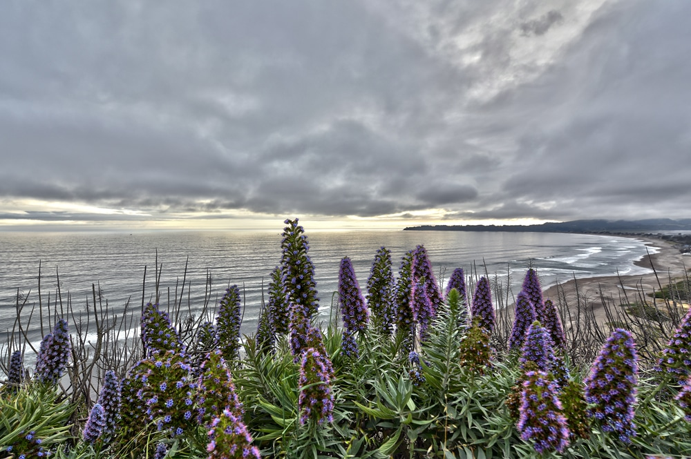 Flowers growing on the cliffs of the Pacific Coast Highway