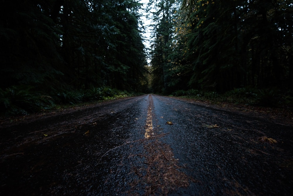 The wet road covered in leaves in Olympic National Park, Washington