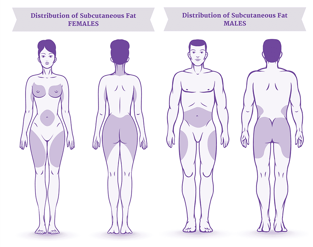 illustration of subcutaneous fat distribution in women and men