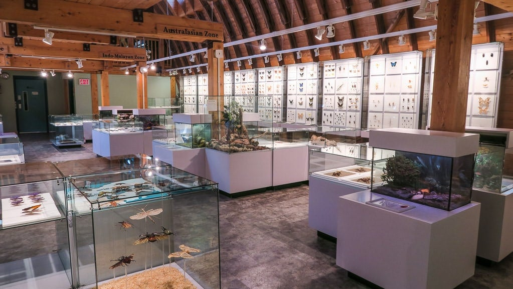 One of the rooms in the Insectarium with thousands of insect specimens from all over the world