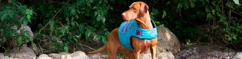 Best-Life-Jackets-PFD-For-Dogs-2020