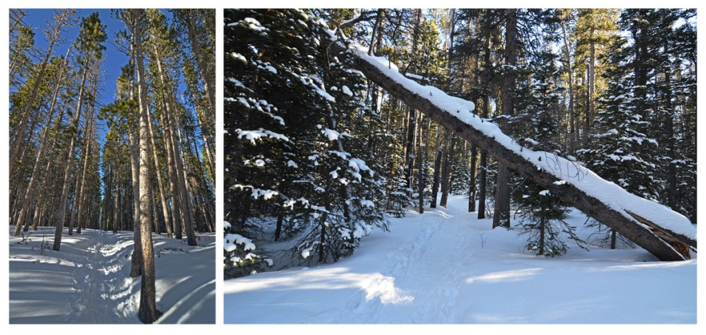 Snow covered trail on Bierstadt Lake Hike