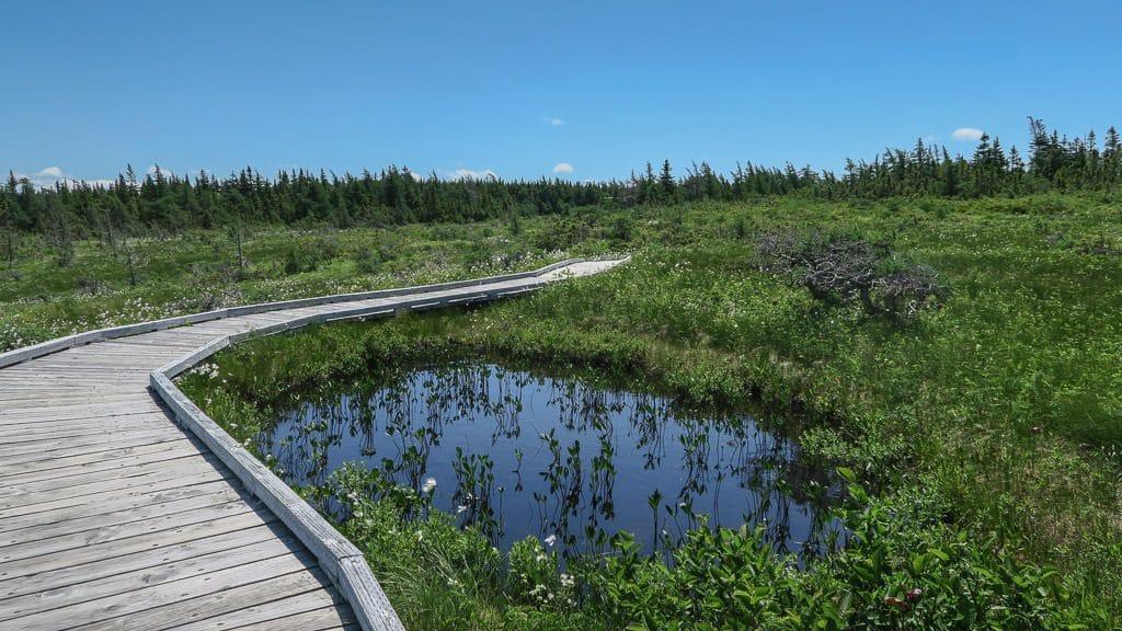 Wooden boardwalk on the Bog trail