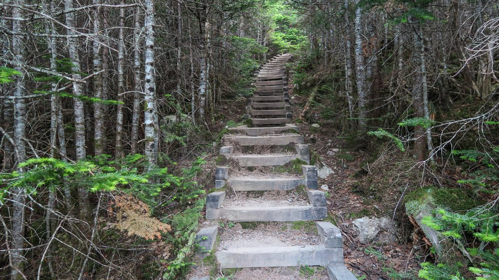 There were many steps through the woods to get to the turnaround point