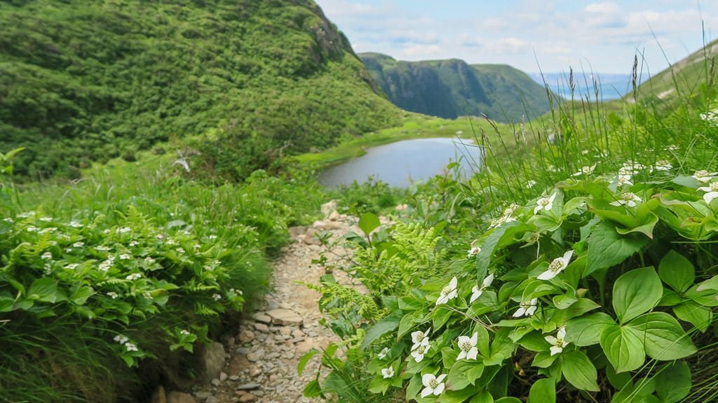 Our way down from Hiking Gros Morne Mountain we came across this beautiful lake