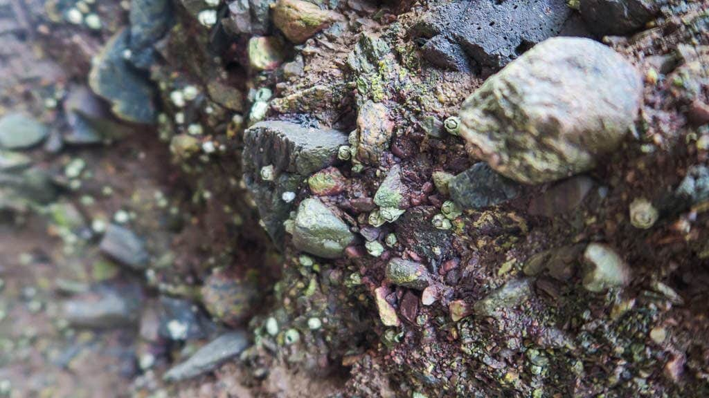 Closeup of some of the rocks with shells and pebbles in them at Hopewell Rocks