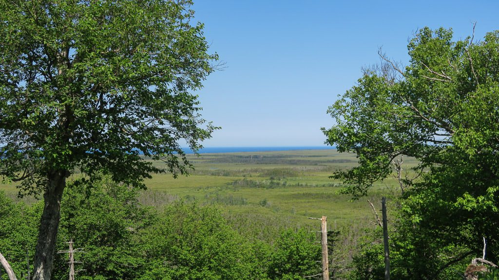 View of open plains on the Baker's Brooke Falls Trail, right outside of the moose exclosure