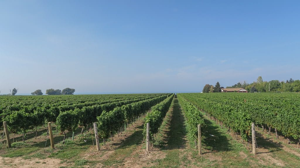 Vineyard at Niagara-on-the-lake, which is a great place to unwind before or after your list of things to do in Niagara Falls