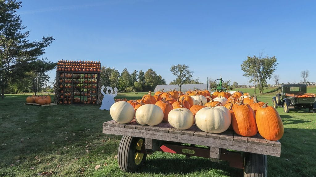 Pumpkins on a cart at a farm in vermont