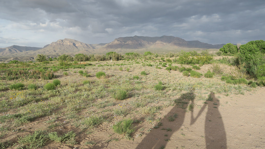 Shadow of Brooke and Buddy holding hands on a gloomy day in the desert, one of the many places to visit in new mexico