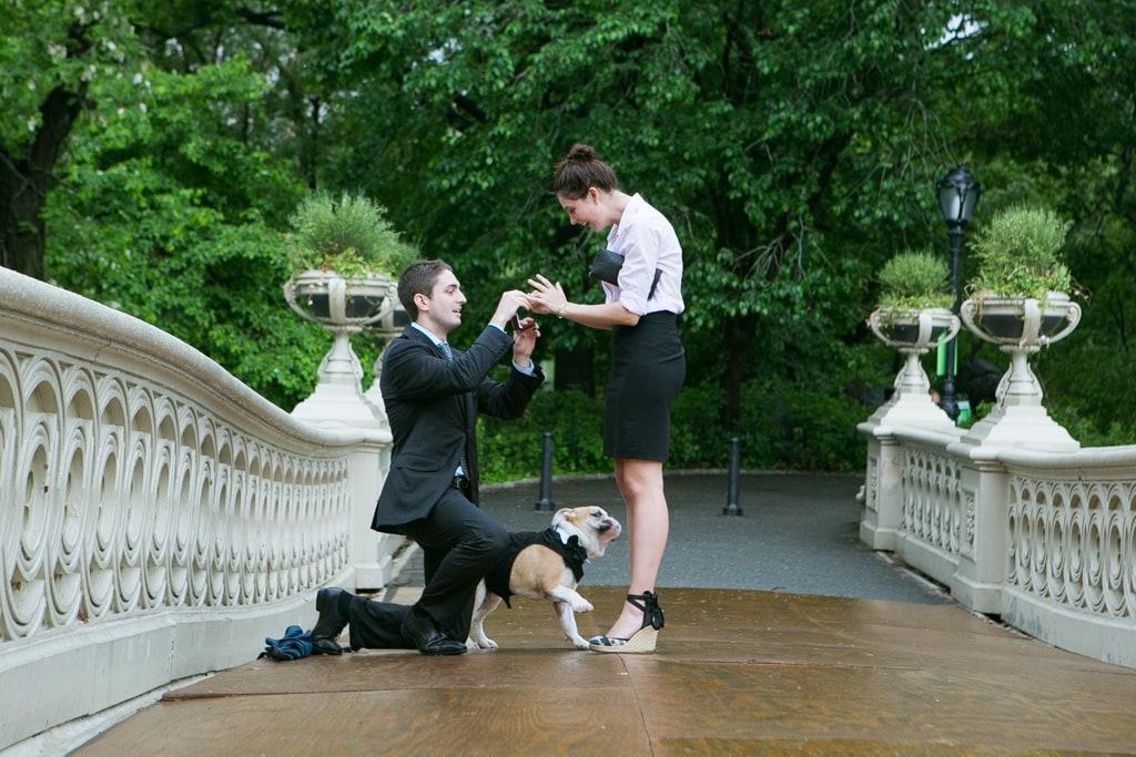 Photo Bow Bridge Wedding Proposal   VladLeto