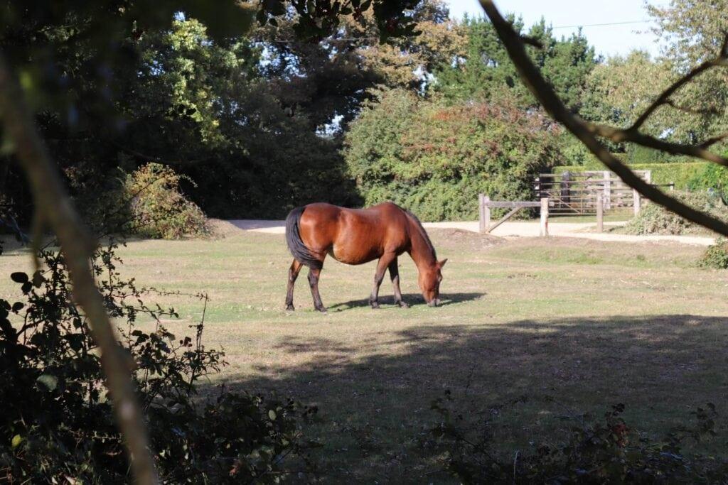 Horse Hero