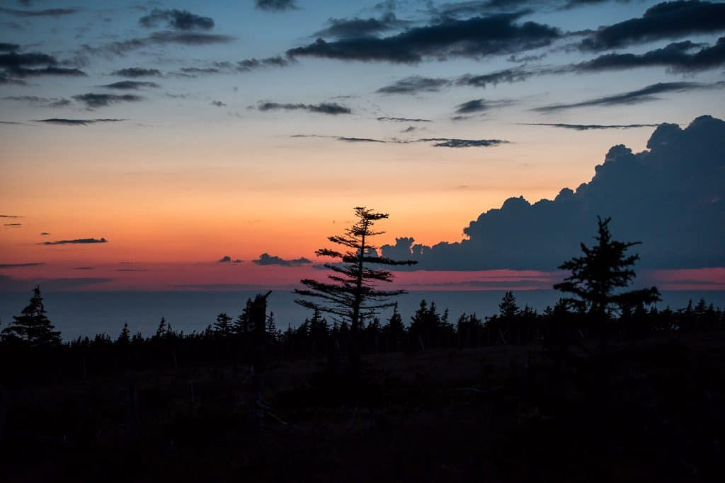 Silhouette of trees during sunset on Skyline trail