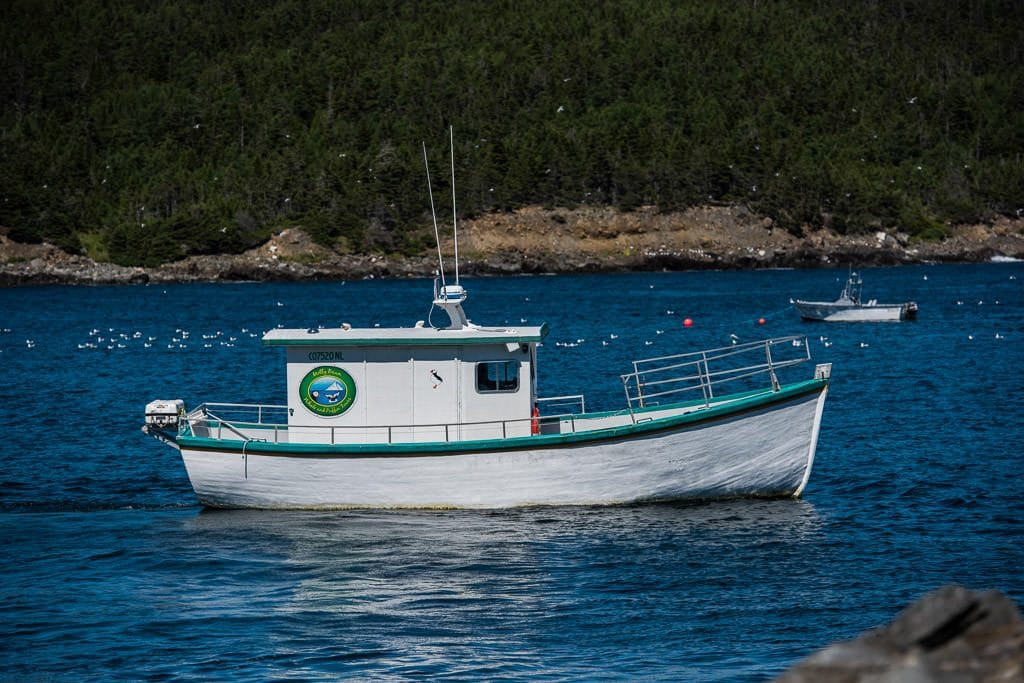 molly bawn whale & puffin tour boat