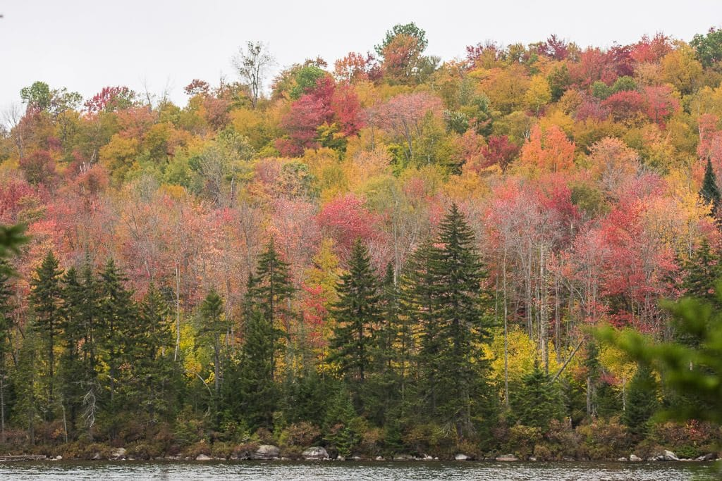 Colorful trees in Vermont during Fall in Groton State Forest