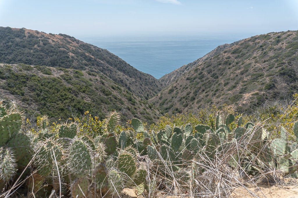 Cactus growing on the side of the trail looking into a valley out towards the ocean.