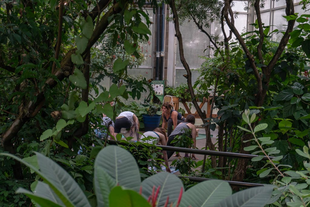 People doing yoga in the Butterfly Pavilion