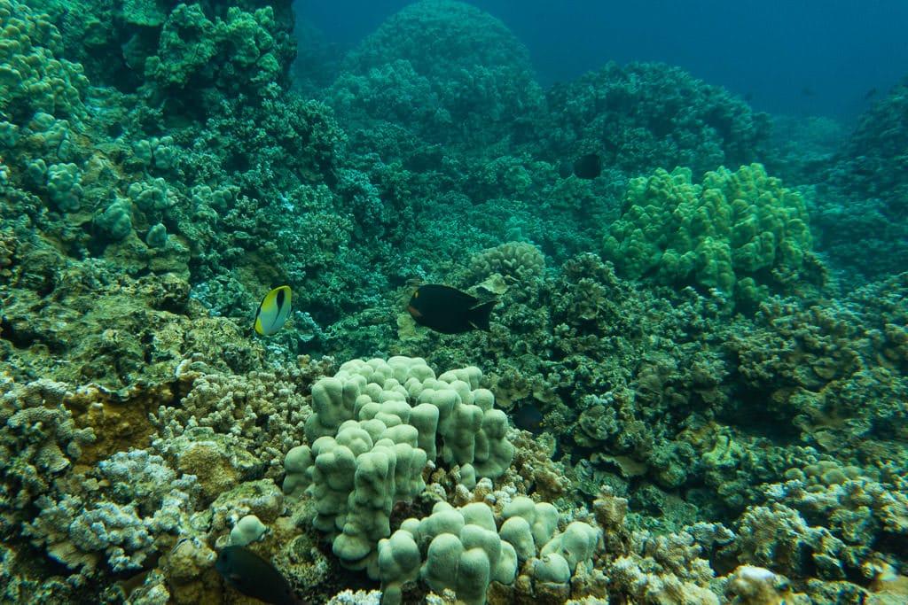 Molokai hawaii snorkeling with reef fish