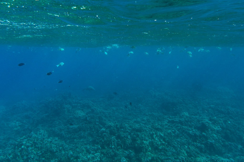 underwater scene while snorkeling in molokai