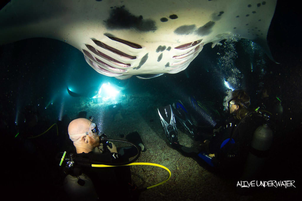 Manta Ray swimming towards the campfire and coming from behind the group of divers sitting on the floor