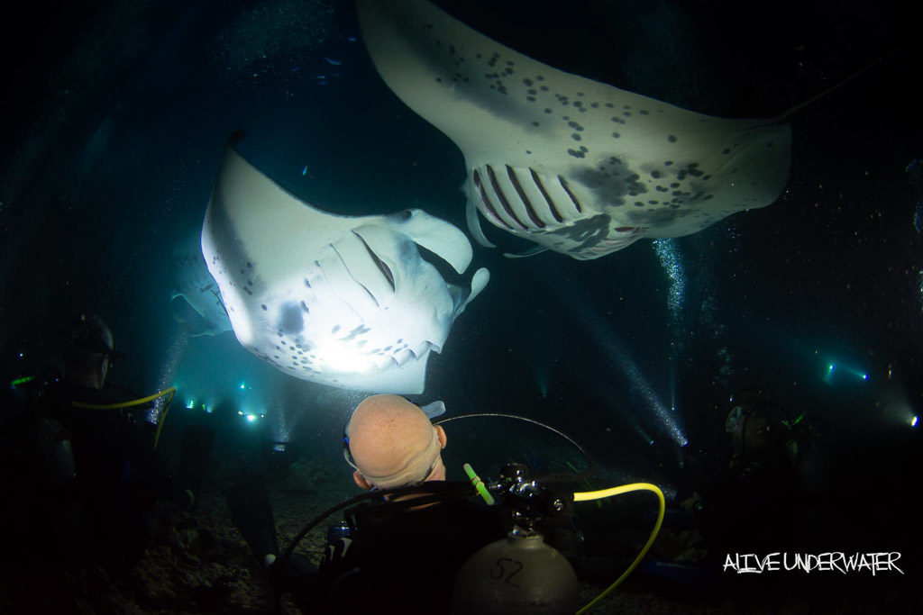 Buddy sitting on the ocean floor in near the Campfire with 2 huge Kona Manta Ray's swimming in front of him