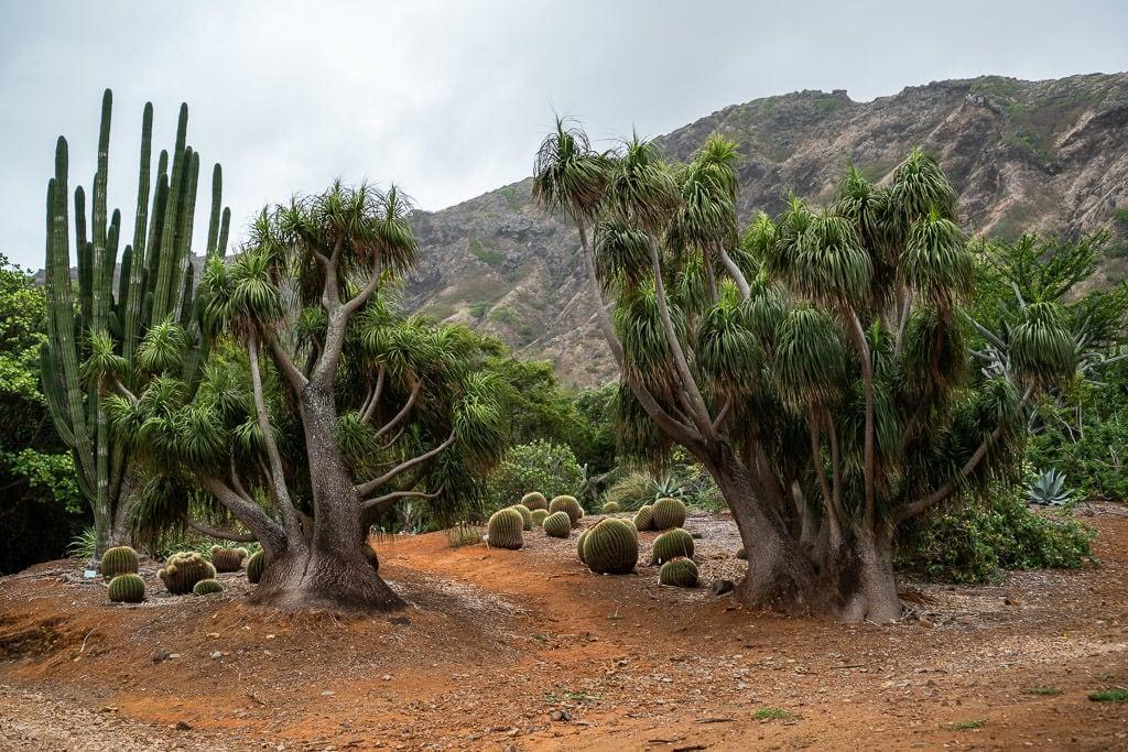 trees at Koko Crater Botanical Garden in oahu