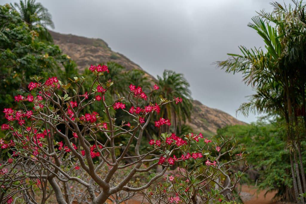 flowers at Koko Crater Botanical Garden in oahu