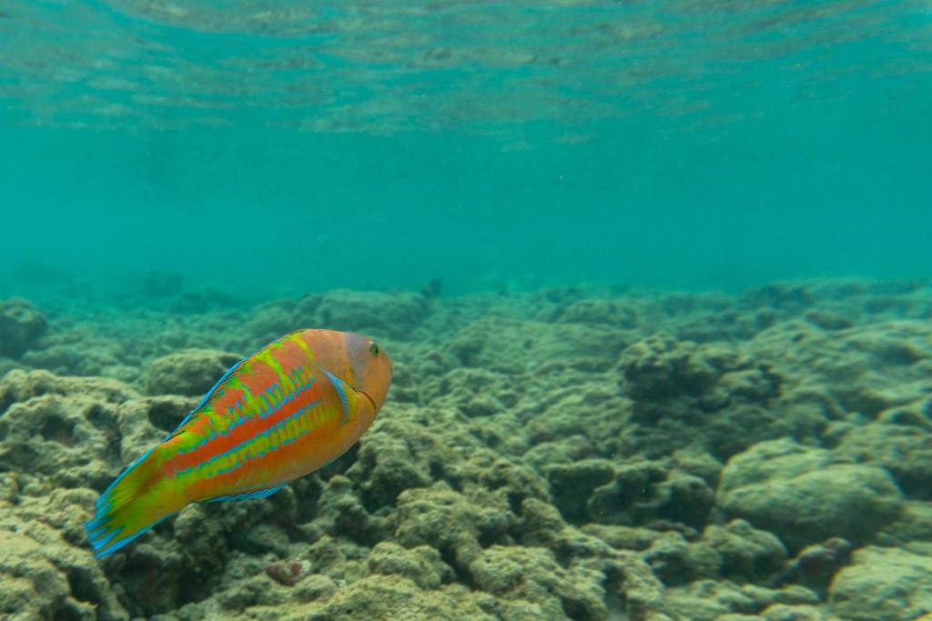 reef fish at Hanauma Bay Nature Preserve