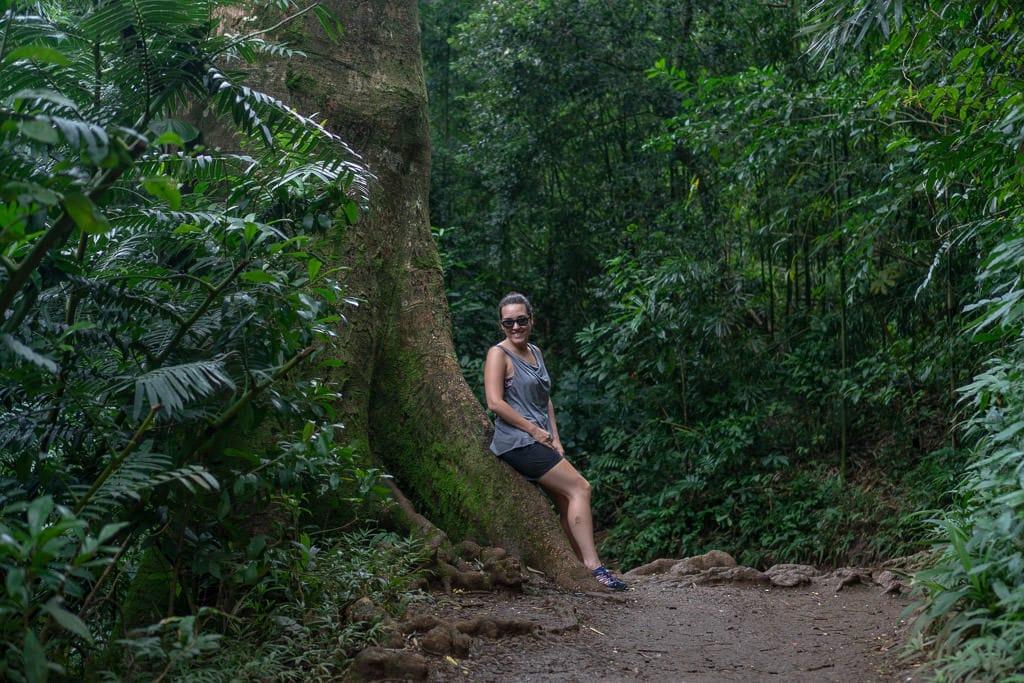 resting on a Manoa Falls Hiking trail