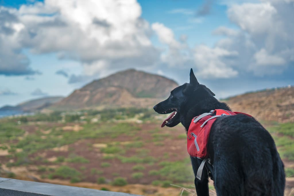 hiking with a dog we watched in Hawaii via TrustedHousesitters