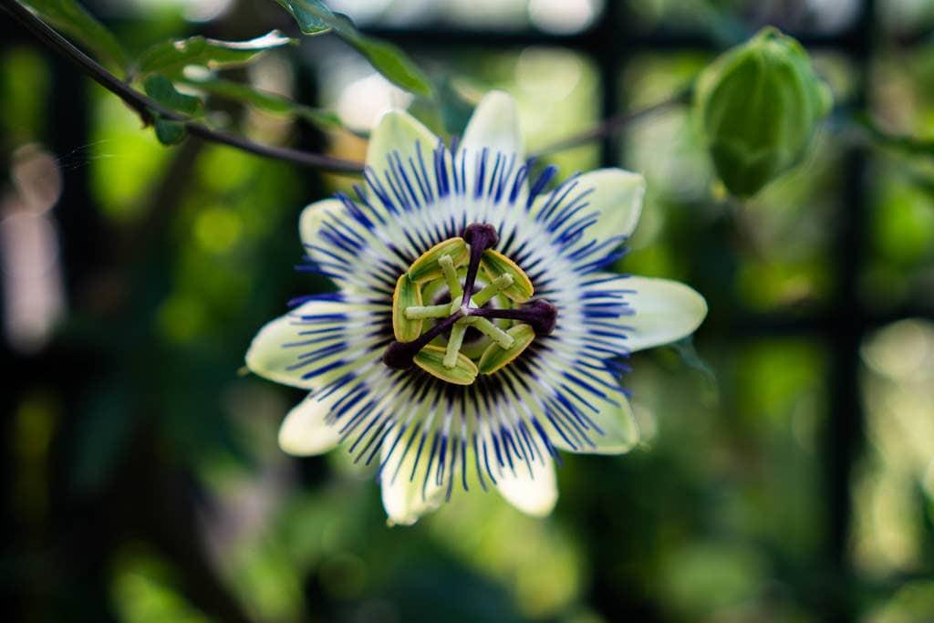colorful flower at inverness botanic garden