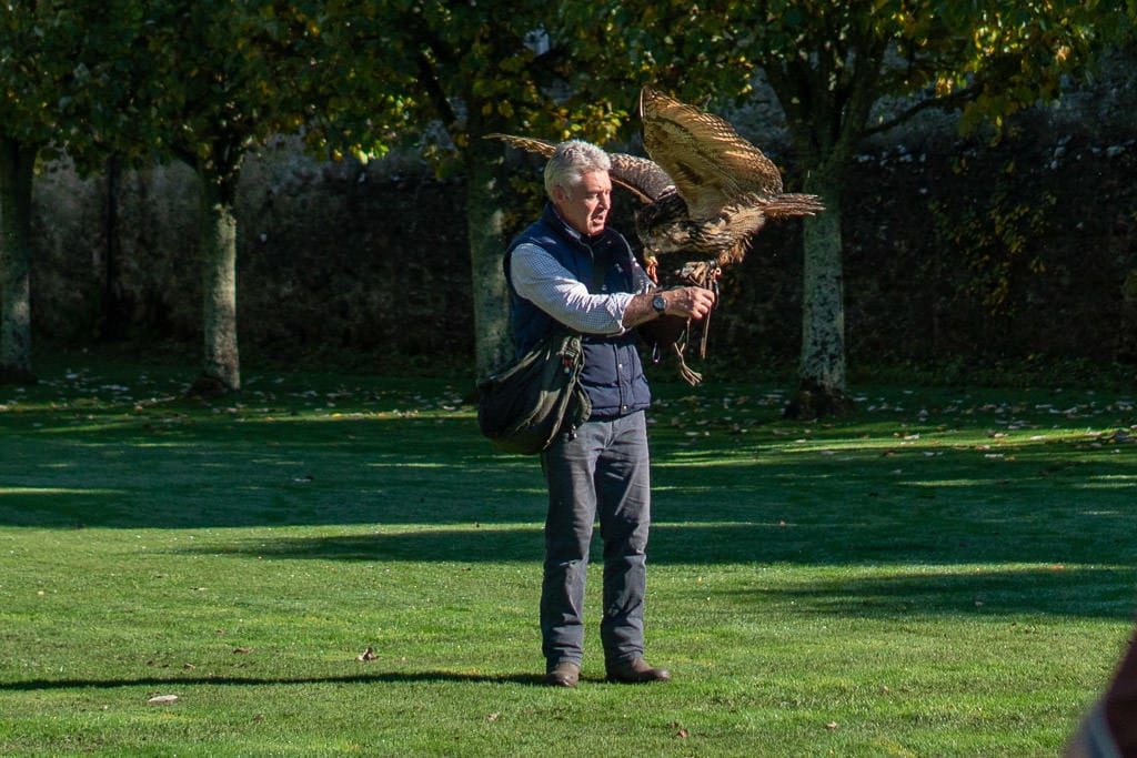 Eagle Owl on the arm of the falconer eating some meat at the Falconry Demonstration during our Dunrobin Castle Grounds Tour