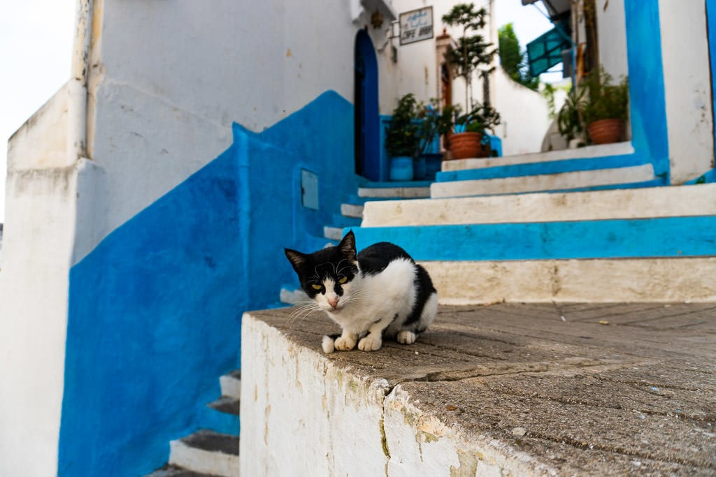 stray cat on colorful stairs in tangier morocco