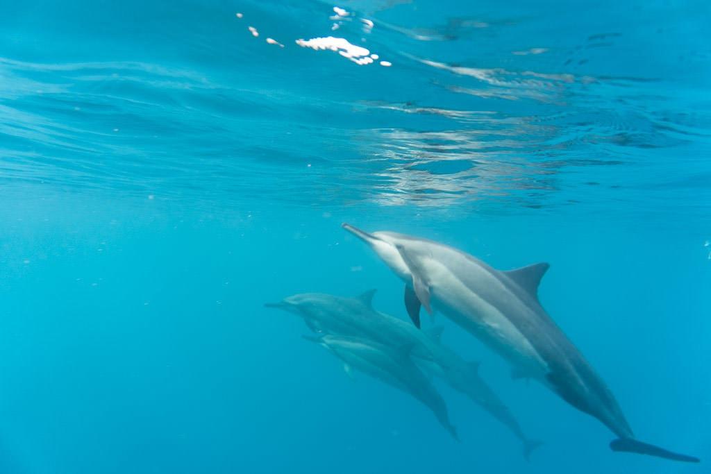 big island kayaking with wild dolphins and snorkeling near kona