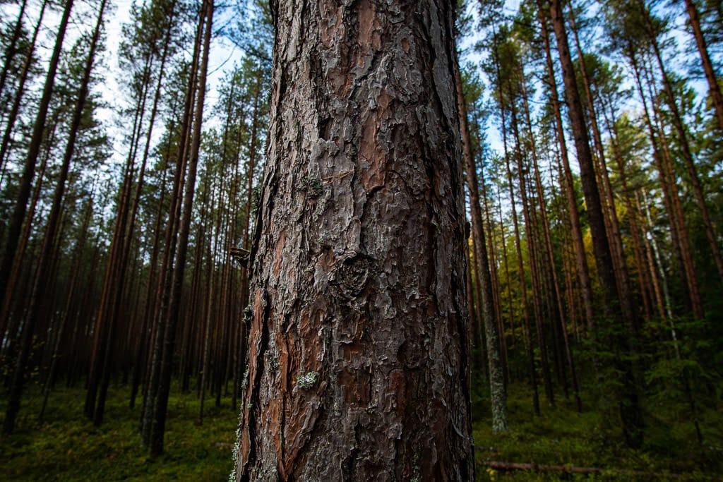 riga latvia forest
