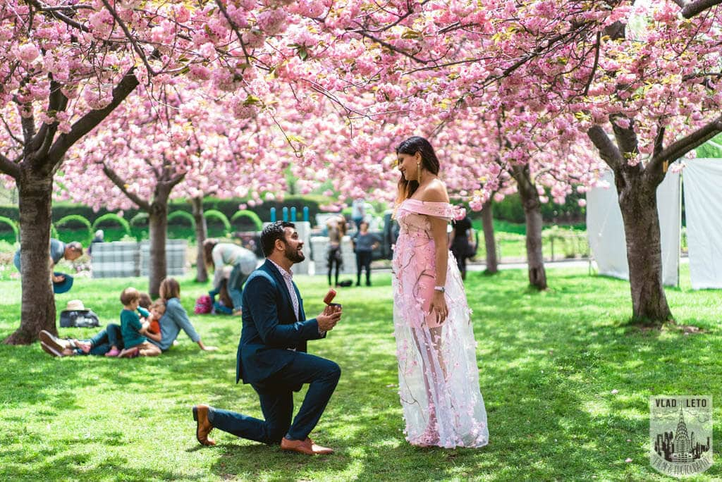 Photo Cherry Blossom Marriage Proposal in Brooklyn Botanical Garden   VladLeto