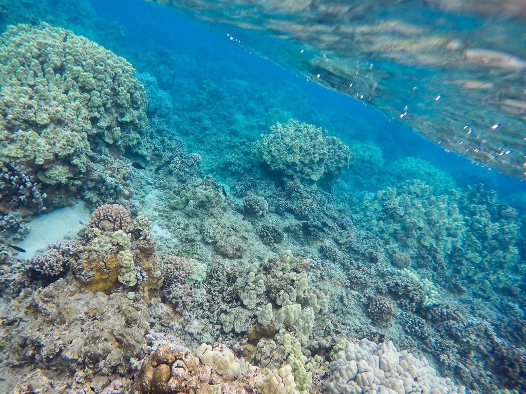 snorkeling in molokai reefs
