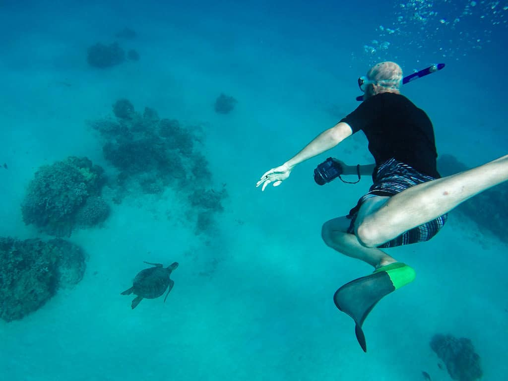 snorkeling in molokai with hawaiian green sea turtle