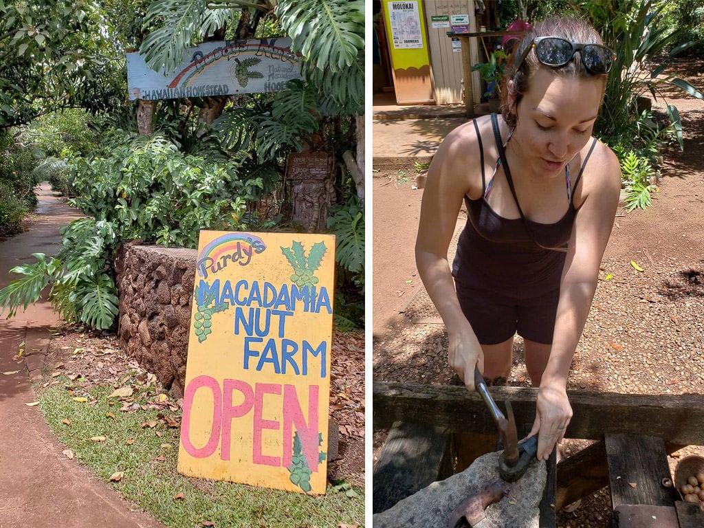 things to do in molokai - macadamia nut farm
