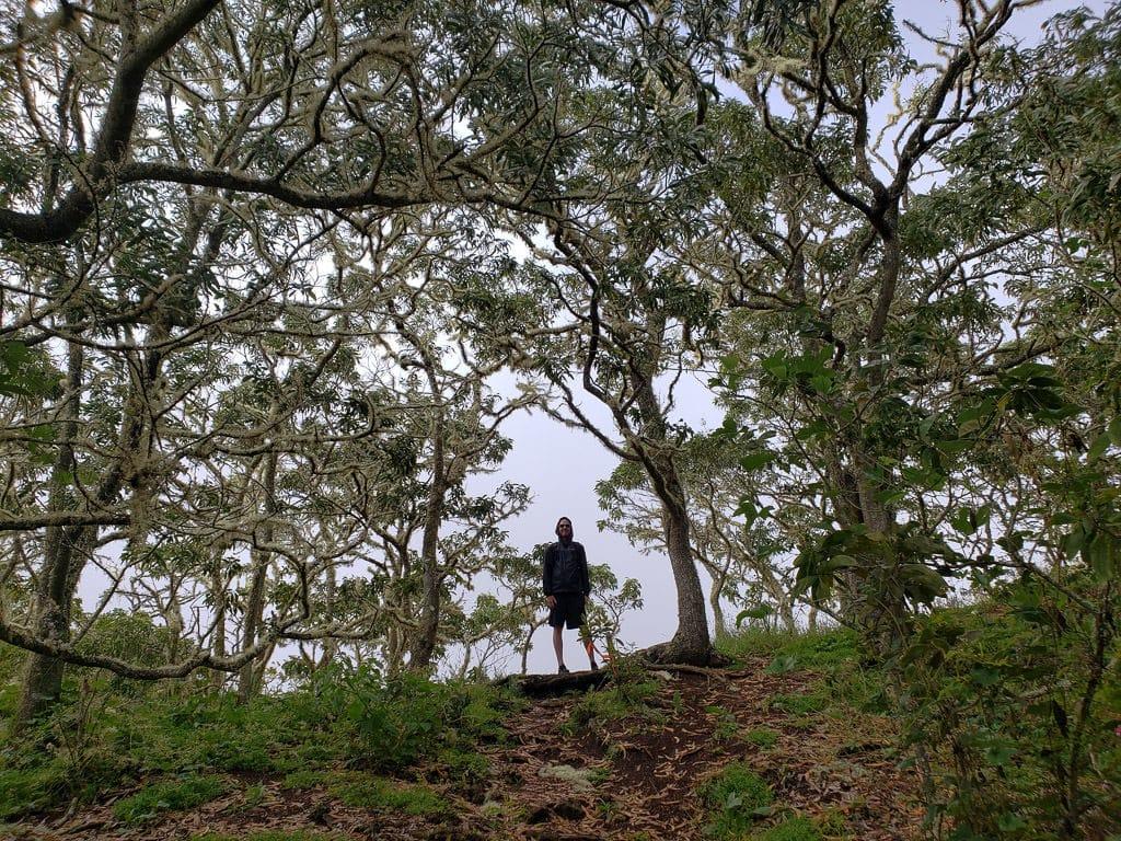 Pu'u Huluhulu Cinder Cone Hike near mauna kea on the big island