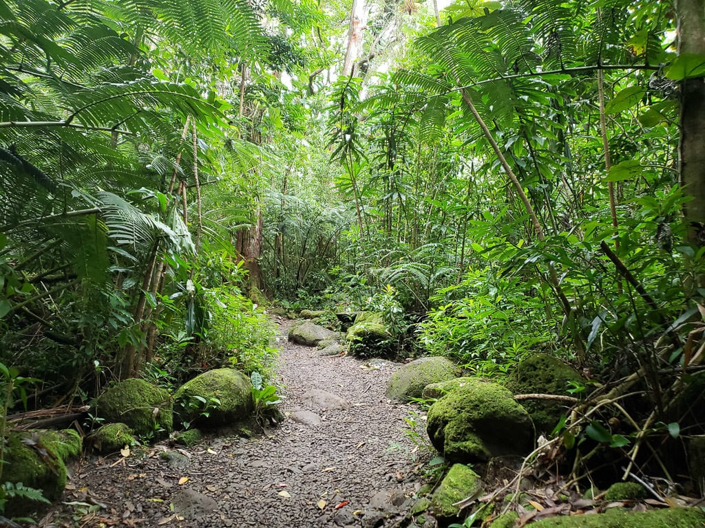 Manoa Falls - one of our favorite oahu hikes