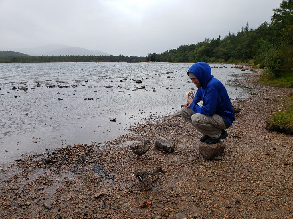 eating a sandwich next to some ducks in Cairngorms National Park