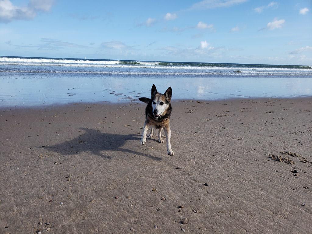 dog running around on Lossiemouth Beach near inverness Scotland