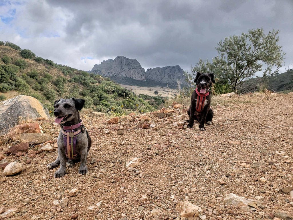 dogs off-leash on a walk while housesitting in rural spain with mountains behind