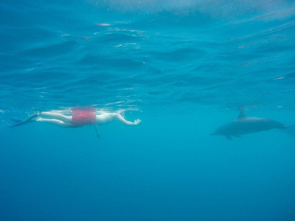 big island kayaking with wild dolphins and snorkeling kona