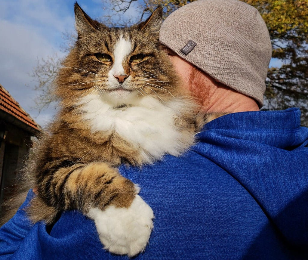 Buddy holding a large norwegian forest cat while international house sitting in France