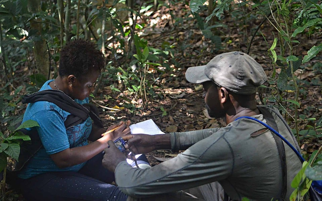 Great apes researcher Gwendolyn Angwa recording chimpanzee data in Tofala Hill Wildlife Sanctuary.