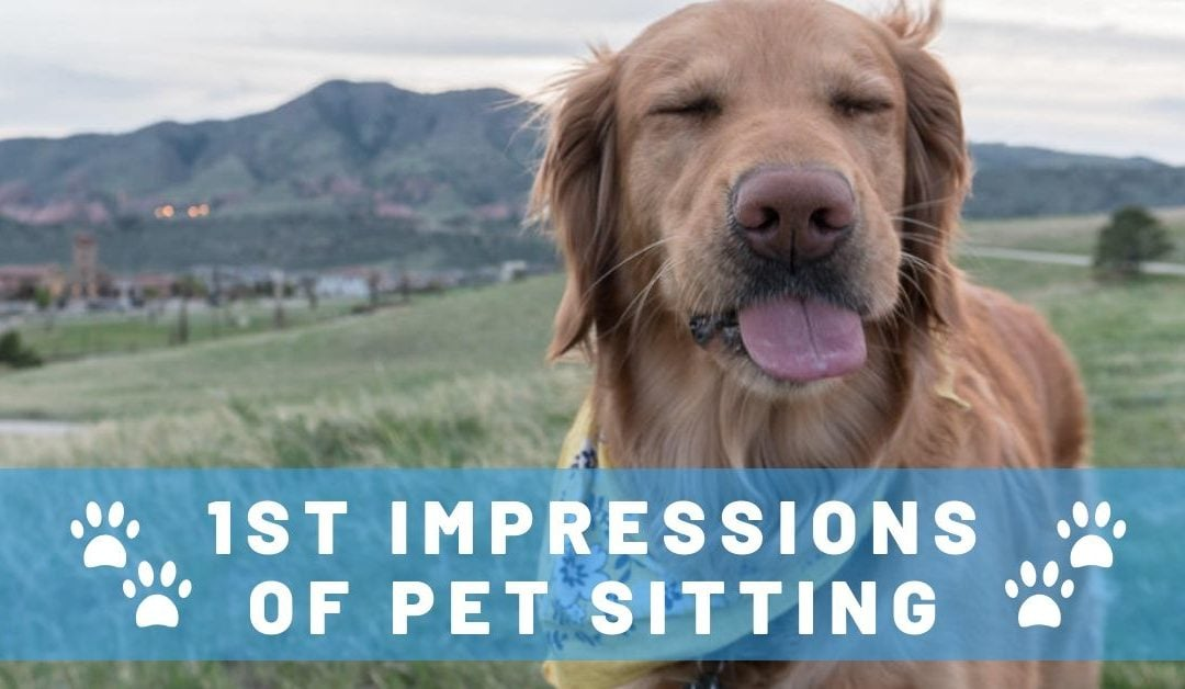 First Impressions of Traveling Full-Time by House and Pet Sitting