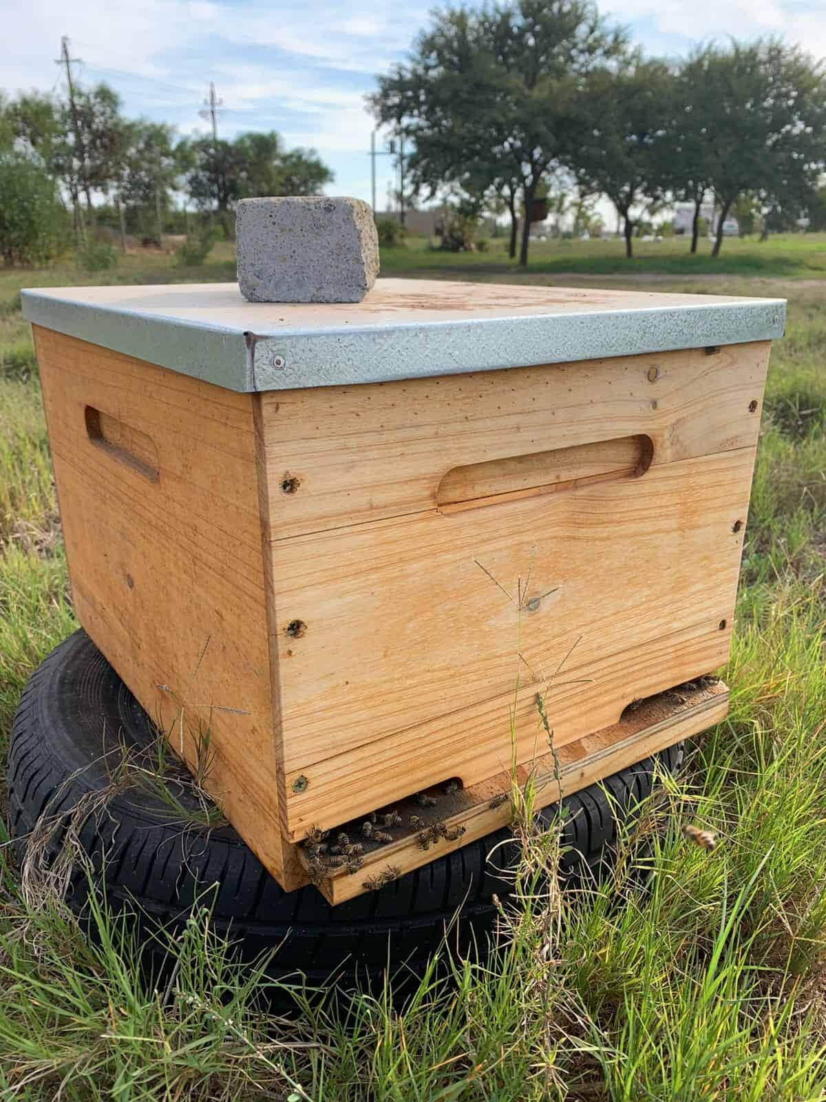 Can You Open Your Beehive At Night?